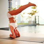 Занятия йогой: упражнения в домашних условиях для начинающих
